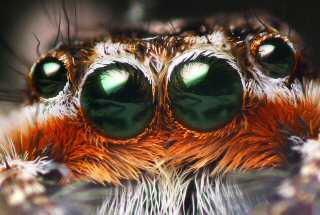 Spider Eyes -GNU- Copyright Free
